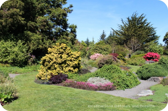 Rhododendrons At Mendocino Coast Botanical Gardens Destinations Detours And Dreams