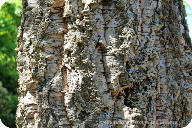 Bark of the cork oak tree