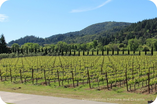 Vineyard at Ferrari-Carano in Dry Creek Valley, California