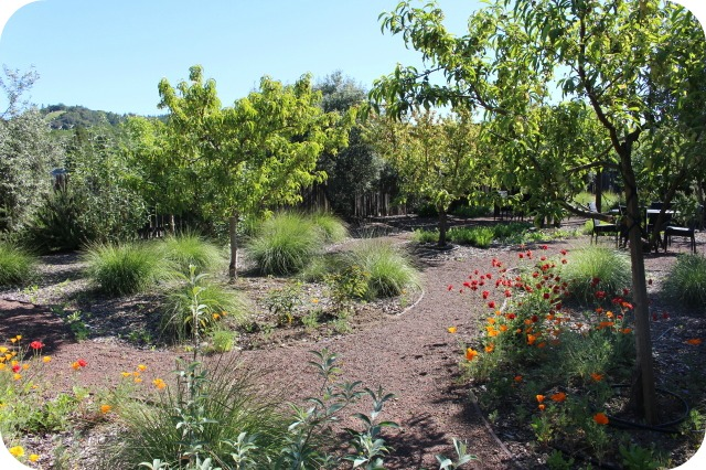 Wine in the Garden: Rustic Beauty in Dry Creek Valley