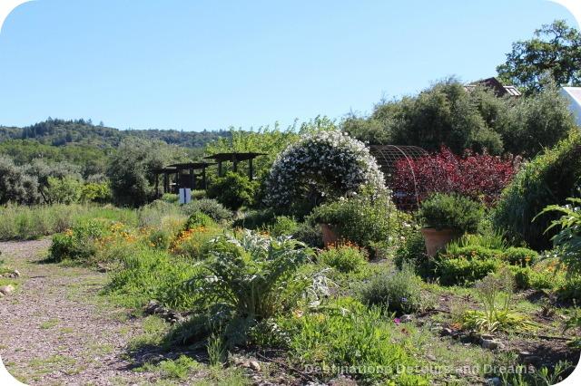 Wine in the Garden: Rustic Beauty in Dry Creek Valley