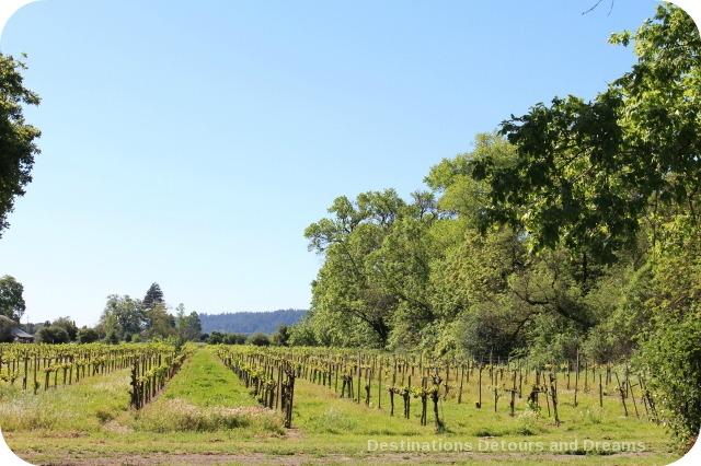 Wine in the Garden. Rustic beauty. Vineyards at Truett Hurst.