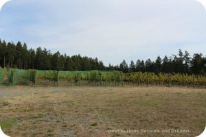 Cherry Point Vineyards