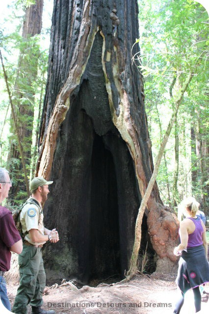 Burnt-out portion of a redwood tree in Hendy Woods State Park, California