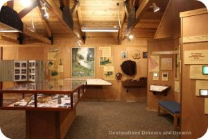 Museum at Humboldt Redwoods State Park Visitor Center