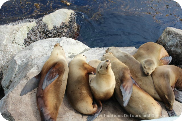 A Day In Monterey: Sea Lions