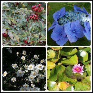 Blooms at Abkhazi Garden: The Garden That Love Built