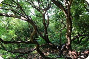 Woodlands at Abkhazi Garden: The Garden That Love Built