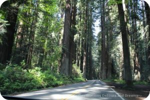 California North Coast Highlights: Avenue of the Giants