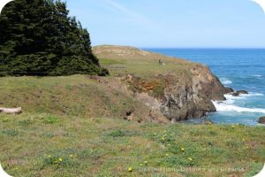 California North Coast Highlights: Mendocino Coast Botanical Gardens bluff