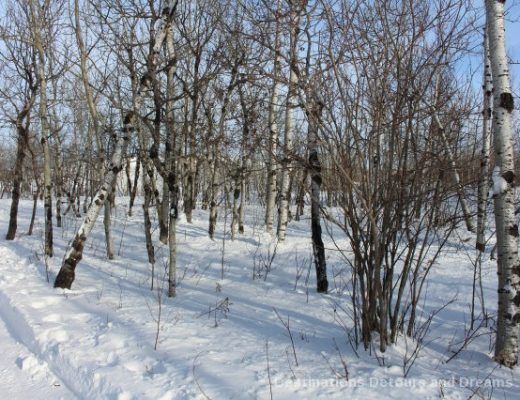 Winnipeg Winter Fun at a Nature Preserve: FortWhyte Alive