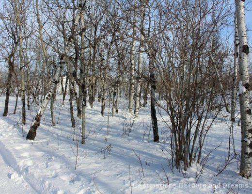 Winnipeg Winter Fun at a Nature Preserve: FortWhyte Alive