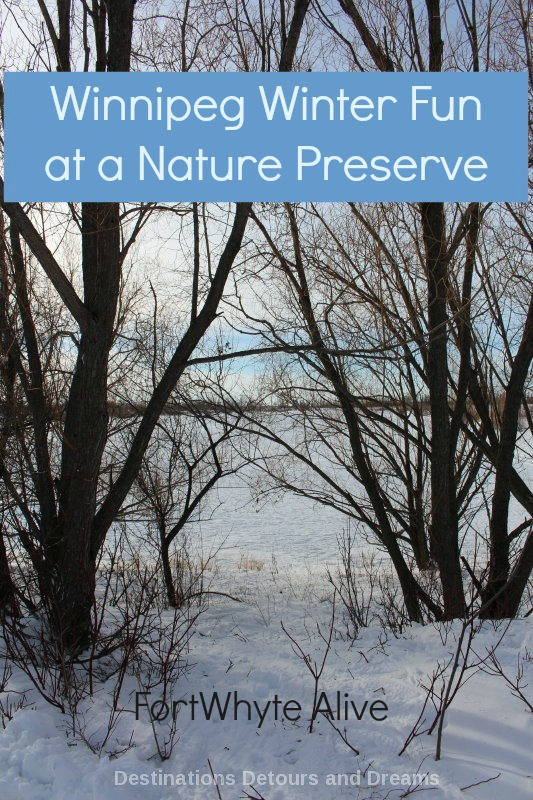 Winter Fun at FortWhyte Alive nature preserve in Winnipeg, Manitoba, Canada - beautiful trails, snowshoeing, more #Winnipeg #Manitoba #Canada #winter
