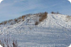 Winnipeg Winter Fun at FortWhyte Alive
