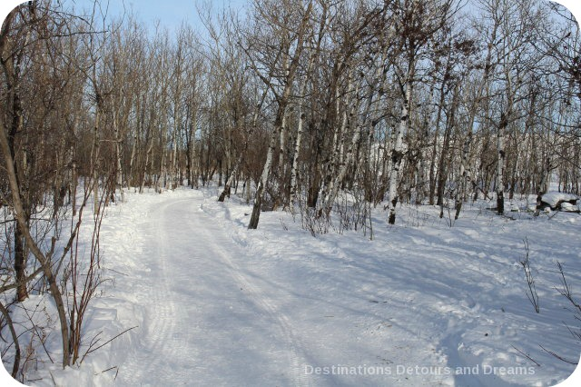 Winnipeg Winter Fun at FortWhyte Alive - trails