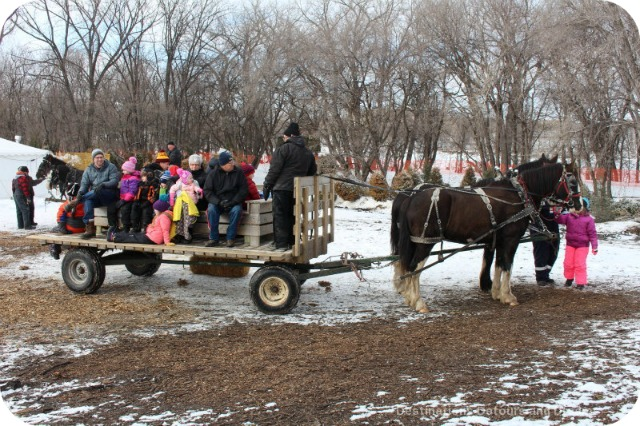 Festival du Voyageur sleigh rides