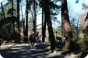 Horse carriage ride at Beacon Hill Park, Victoria, British Columbia