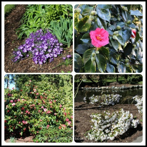 Spring blooms in Beacon Hill Park, Victoria, British Columbia