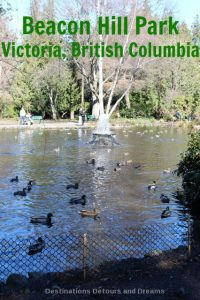 Beacon Hill Park: a 200-acre park in downtown Victoria, British Columbia with trees, paths, ponds, playgrounds, children's farm