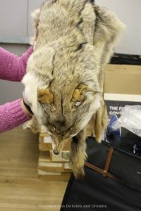 Behind the scenes at the Costume Museum of Canada - fur stole