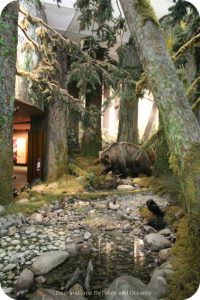 The story of British Columbia at the Royal BC Museum - forest landscapes