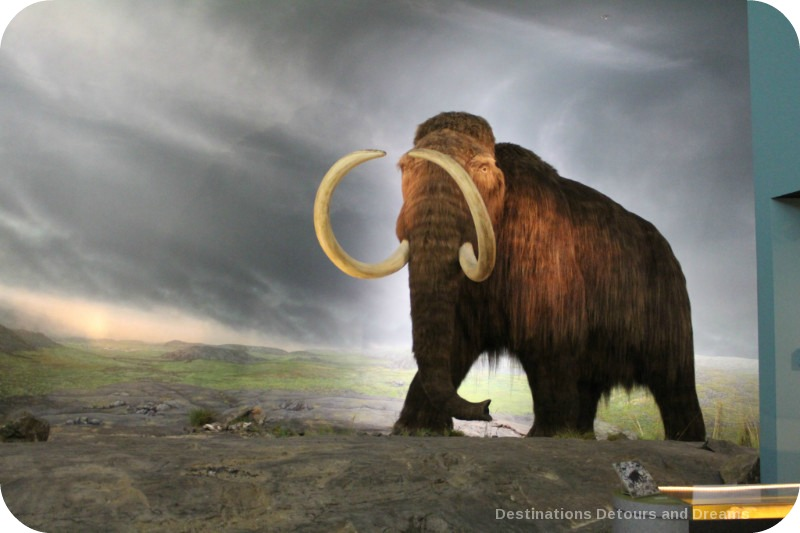 The story of British Columbia at the Royal BC Museum in Victoria - mammoths once lived all over North and Central America