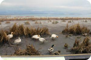 The story of British Columbia at the Royal BC Museum - marshland