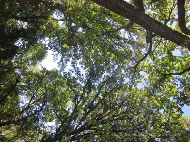 Sun shining through the treetops on a Winnipeg summer day
