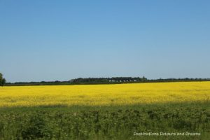 Canadian Prairie Summer Road Trip Photo Story: yellow canola fields