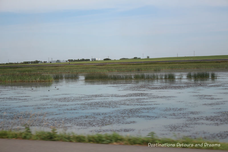 Canadian Prairie Summer Road Trip Photo Story: marsh