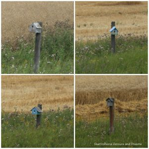 Birdhouses on old fence posts - see on The Great Train Robbery: a fun excursion on Manitoba's Prairie Dog Central Railway, a heritage train