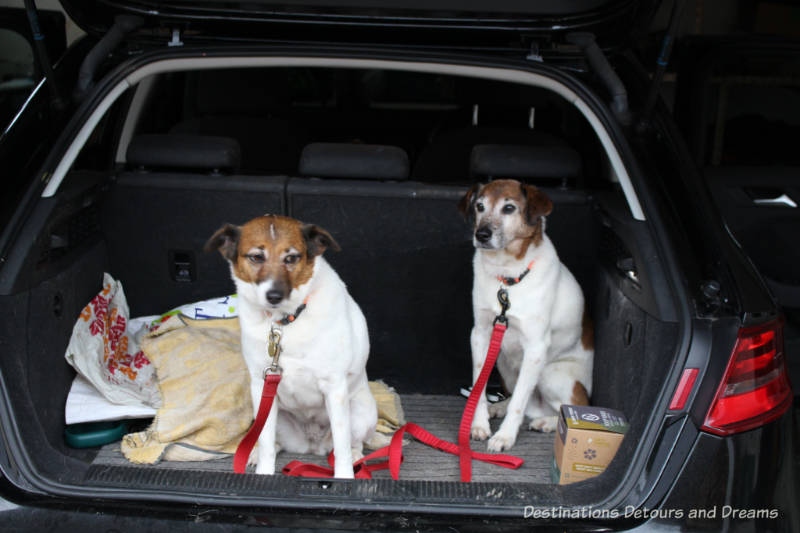 The House Sitting Experience - in the car and ready to go
