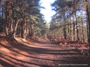 The House Sitting Experience - heathland area where we walked the dogs