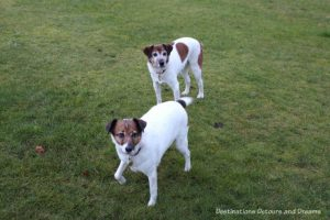 The House Sitting Experience - dogs in our care