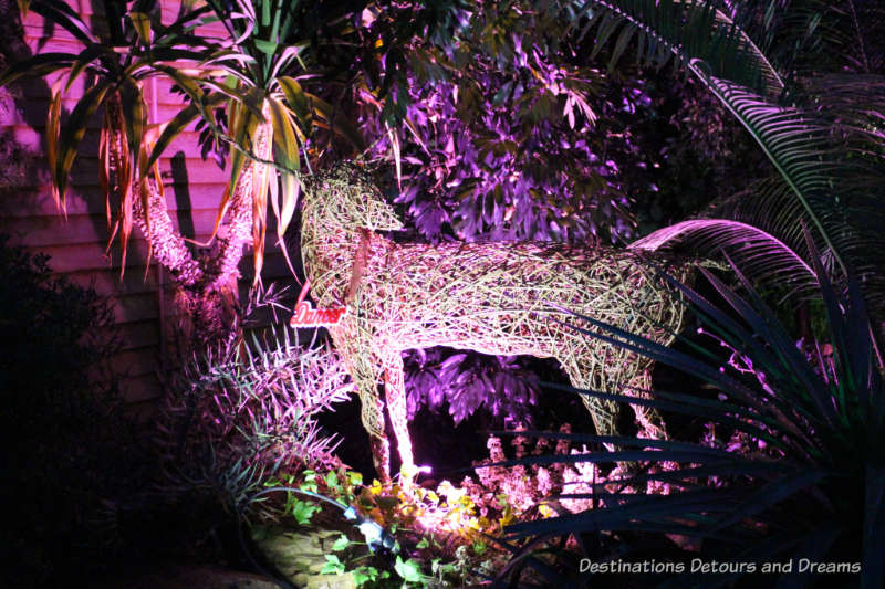 Magical Christmas Glow at RHS Garden Wisley in Surrey, England