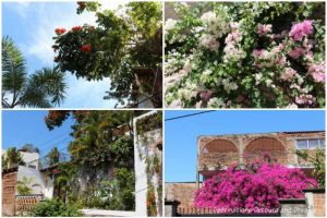Impressions of Puerto Vallarta: palm trees and blooms