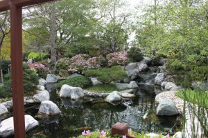 Japanese Friendship Garden pond
