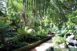Lush tropical vegetation inside the Balboa Park Botanical Building