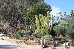 Cacti and trees in Balboa Park Desert Garden