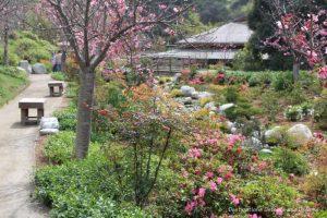 Pathway in the Japanese Friendship Garden