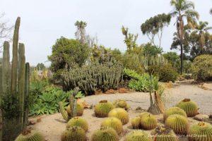 ld Cactus Garden in Balboa Park