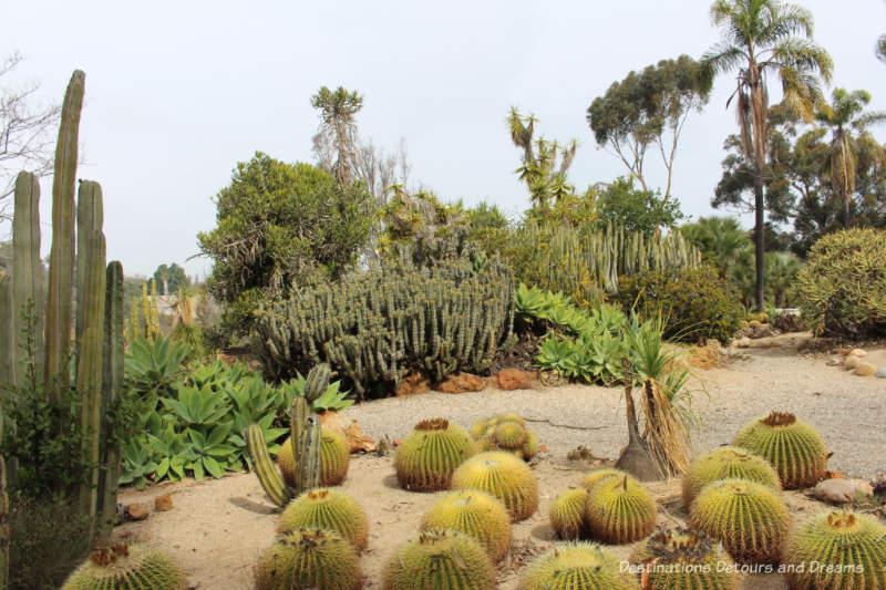 Old Cactus Garden in Balboa Park