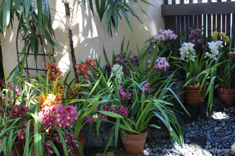 Orchids inside the Balboa Park Botanical Building