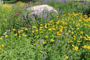 A flower bed of native plants at the entrance to the parking lot of Living Prairie Museum