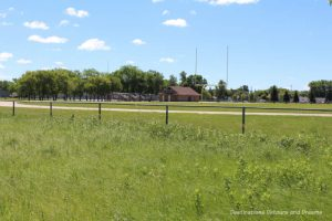 Living Prairie Museum tall grass prairie field with manicured playing field behind it