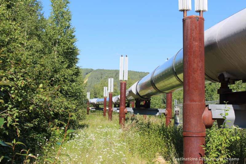Alaska pipeline at start of Gold Dredge 8 tour near Fairbanks