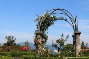University of British Columbia Rose Garden