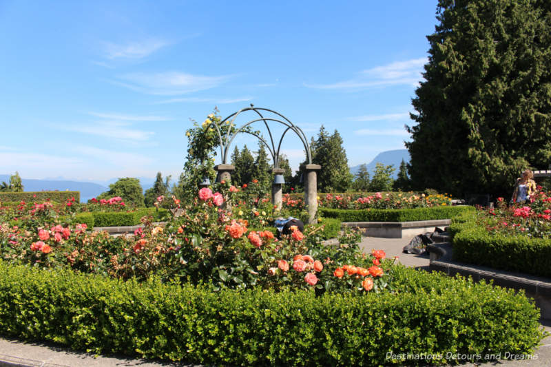 UBC Rose Garden in Vancouver, British Columbia