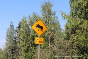 Watch for moose sign along Cheena Hot Springs Road, Alaska