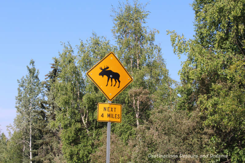 Watch for moose sign along Cheena Hot Springs Road, Alaska